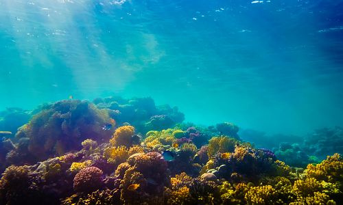 Image of a coral reef taken underwater